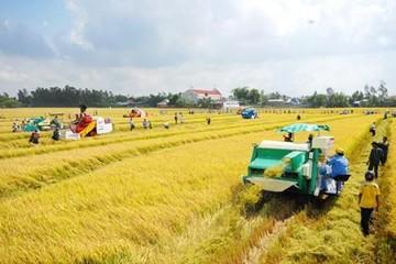 Cần Thơ dự kiến xuất khẩu một triệu tấn gạo trong 2014
