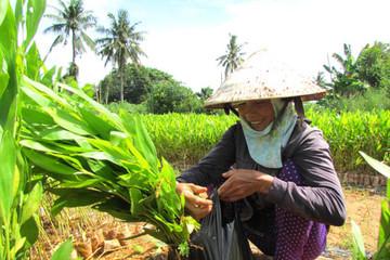 Hầu hết hộ nông dân có thu nhập trên trung bình chưa tham gia BHYT
