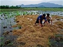 Philippines sẽ nhập khẩu 800.000 tấn gạo năm 2014