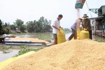 Mexico tìm hiểu thị trường lúa nguyên liệu của An Giang