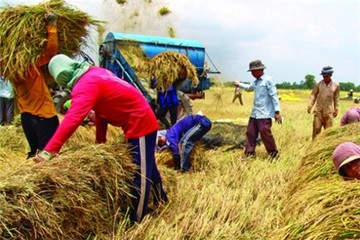 Việt Nam tăng cạnh tranh đấu thầu gạo quốc tế
