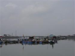 Đà Nẵng: Dân nuôi cá bè không biết đi về đâu