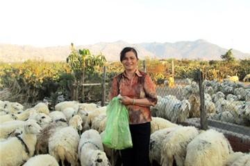 Chị Nguyễn Thị Năm, tỷ phú nuôi dê, cừu trên đồng đất Quán Thẻ