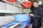 Đua nhau nuôi... gián đất xuất sang Trung Quốc: Coi chừng dính bẫy
