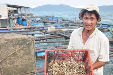 Làng tôm hùm xuất khẩu
