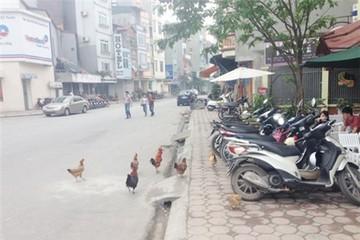 Đặc sản thủ đô: Gà đi bộ trên phố