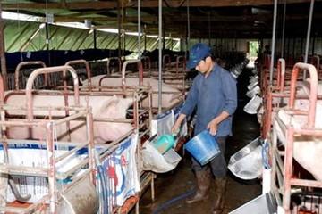 Thức ăn gia súc khan hiếm, giá tăng cao