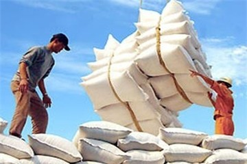 300.000 tấn gạo tắc ứ tại Hải Phòng