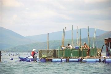 Ngân hàng tạo điều kiện thuận lợi cho phát triển thủy sản