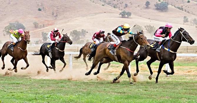 Cá cược đua ngựa, đua chó sẽ có Nghị định riêng?