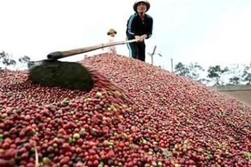Tây Nguyên, cà phê và gói 12.000 tỷ