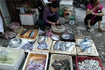 Mực da bong, râu rụng giá 10.000 đồng/lạng ở Hà Nội