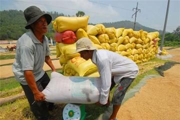 Doanh nghiệp trả chỉ tiêu xuất khẩu gạo sang Philippins