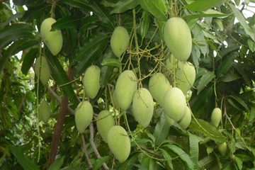Giá nhiều loại trái cây ở chợ đầu mối giảm 50%
