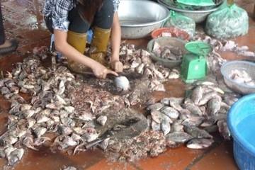 Cục an toàn thực phẩm bác tin đồn về thịt ôi, cá chết tại chợ Hà Nội