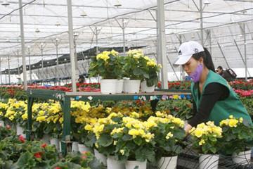 Đà Lạt: 1,5 triệu Euro xây dựng trung tâm nhân giống hoa hiện đại