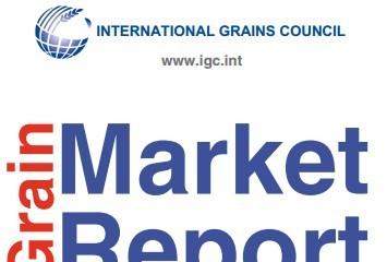 IGC: Giá ngũ cốc toàn cầu giảm 2% trong tháng 5