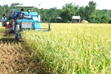 Nông dân miền Tây đuối sức vì nông sản nghẽn đầu ra