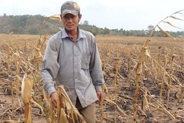 Hạn hán vẫn đe dọa các tỉnh miền Trung