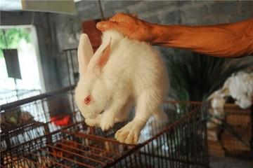Thu lợi nhuận bạc tỷ nhờ nuôi 15.000 con thỏ