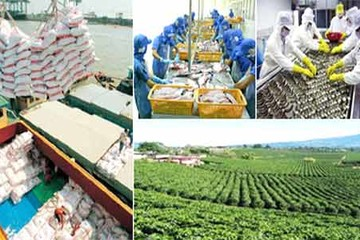 Xuất khẩu nông lâm thuỷ sản 7 tháng đạt 17,4 tỷ USD, tăng gần 12%