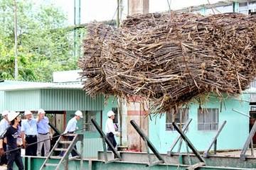 Vụ mía đường 2013-2014, Việt Nam sản xuất được 1,59 triệu tấn đường