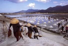 Sản xuất muối 7 tháng đạt mức cao, vẫn phải chi 11 triệu USD để nhập khẩu