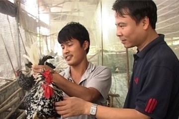 Chủ trại gà quý phi nghìn con