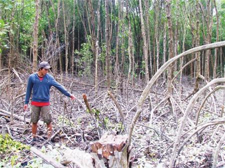 242.000 ha rừng ngập mặn... biến mất