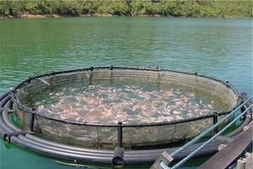 Sản lượng thủy sản nuôi toàn cầu cần tăng 130% vào năm 2050