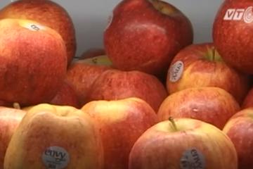 Từ đầu năm, Việt Nam chưa nhập hoa quả nào từ Úc và New Zealand