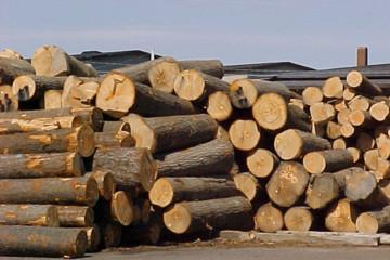 """""""Kích"""" tiến trình sử dụng gỗ hợp pháp"""