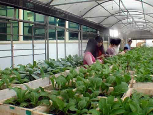 Triển vọng mới đầu tư vào nông nghiệp