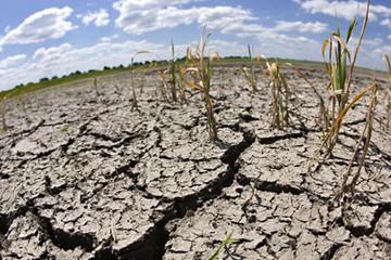 Phú Yên:Hạn hán kéo dài hơn 1.400ha rừng bị chết