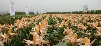 Ngành trồng trọt phấn đấu đạt giá trị sản xuất 1 tỷ USD trong Vụ Đông 2014