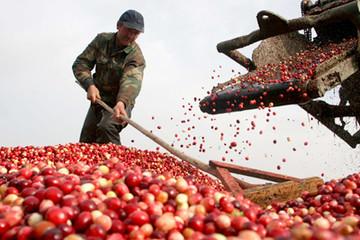 Một tuần nhiều biến động của thị trường nông sản thế giới