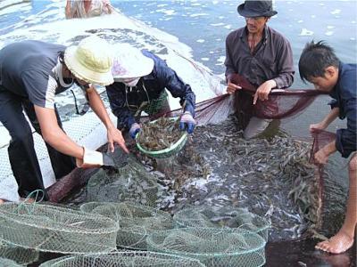 Thủy sản Cà Mau giải trình nguyên nhân LNST sau soát xét giảm 18%