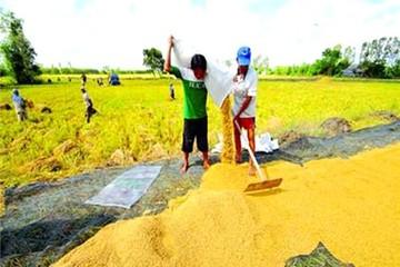 Để gạo Việt không vô danh