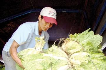 Người Hàn rót tiền vào nông nghiệp Việt