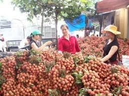 Vải và nhãn Việt Nam xuất khẩu sang Mỹ: Triển vọng và thách thức