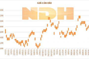 Tuần 17-23/10: Giá lúa tại ĐBSCL tăng tuần thứ tư liên tiếp