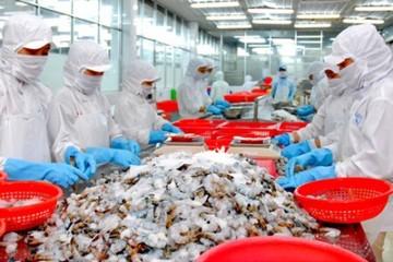 Xuất khẩu tôm 9 tháng đầu năm gần chạm 3 tỷ USD