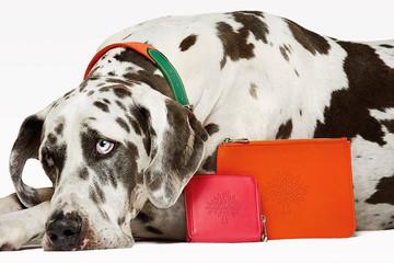 Mulberry ra mắt túi da cao cấp cùng phụ kiện dây xích và vòng cổ cho cún yêu