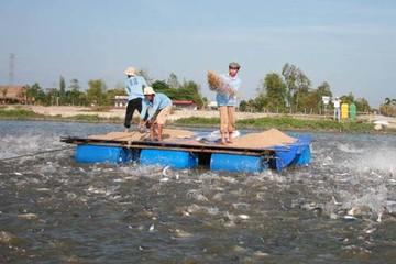 ANV thành lập công ty con nuôi trồng thủy sản