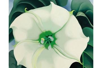 Sốc với bức tranh hoa trắng trị giá hơn 940 tỷ