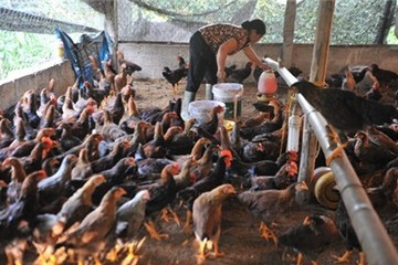 Thị trường thực phẩm cuối năm: Thịt ngoại tràn ngập, người nuôi khốn đốn