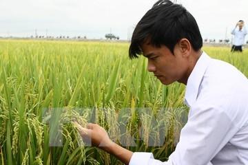 """""""Muốn nông nghiệp cạnh tranh thành công phải bắt đầu từ giống"""""""