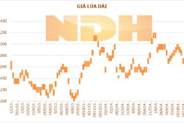 Tuần 28/11-4/12: Đà giảm chững lại, giá lúa gạo vẫn đứng ở mức thấp nhất kể từ tháng 6