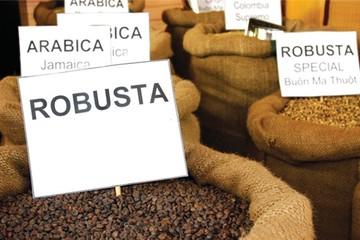 Xuất khẩu cà phê: Tiếng to, miếng vẫn nhỏ