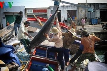 Cá ngừ đại dương Việt Nam xâm nhập thị trường Nhật Bản
